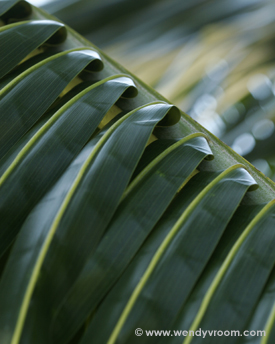 Palm Fronds - - Tropical Macro Matted & Giclée Canvas Prints
