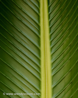 Palm Fronds - Tropical Macro Matted & Giclée Canvas Prints