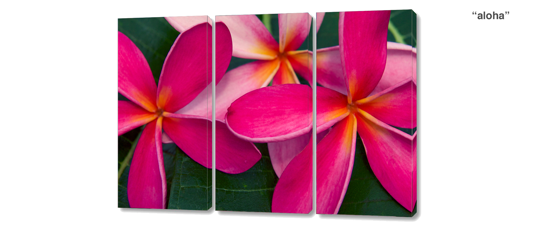 triptych plumeria - 3 Piece limited edition giclee canvas floral wall decor
