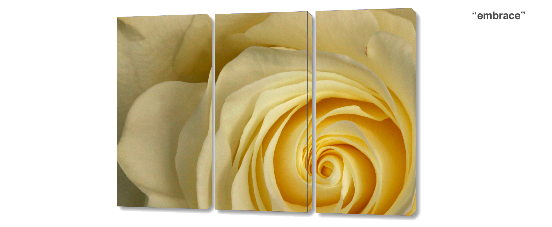 triptych rose - 3 Piece limited edition giclee canvas floral wall decor