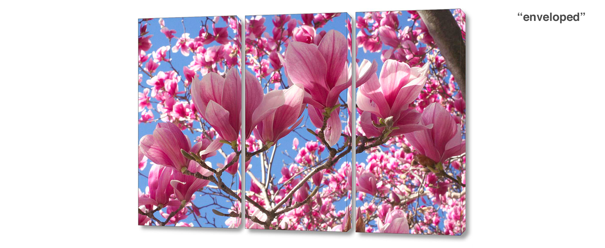 triptych magnolia tree - 3 Piece limited edition giclee canvas floral wall decor