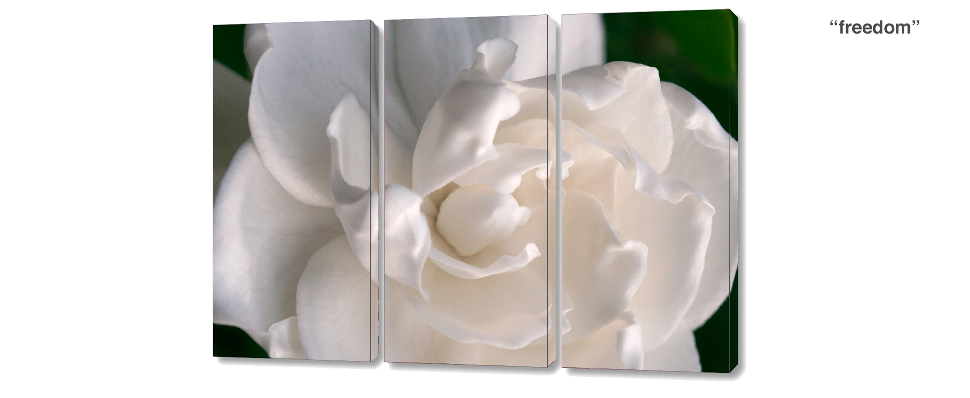 triptych gardenia - 3 Piece limited edition giclee canvas floral wall decor
