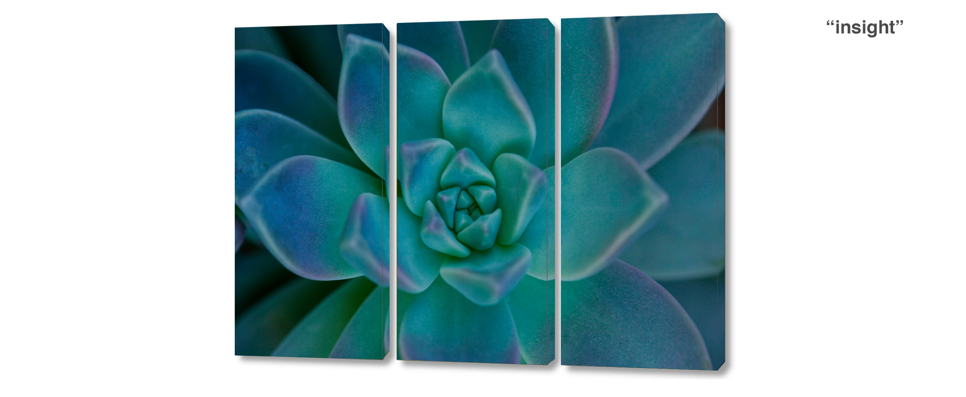 triptych succulent - 3 Piece limited edition giclee canvas floral wall decor