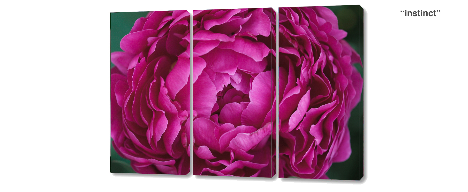 triptych peony - 3 Piece limited edition giclee canvas floral wall decor