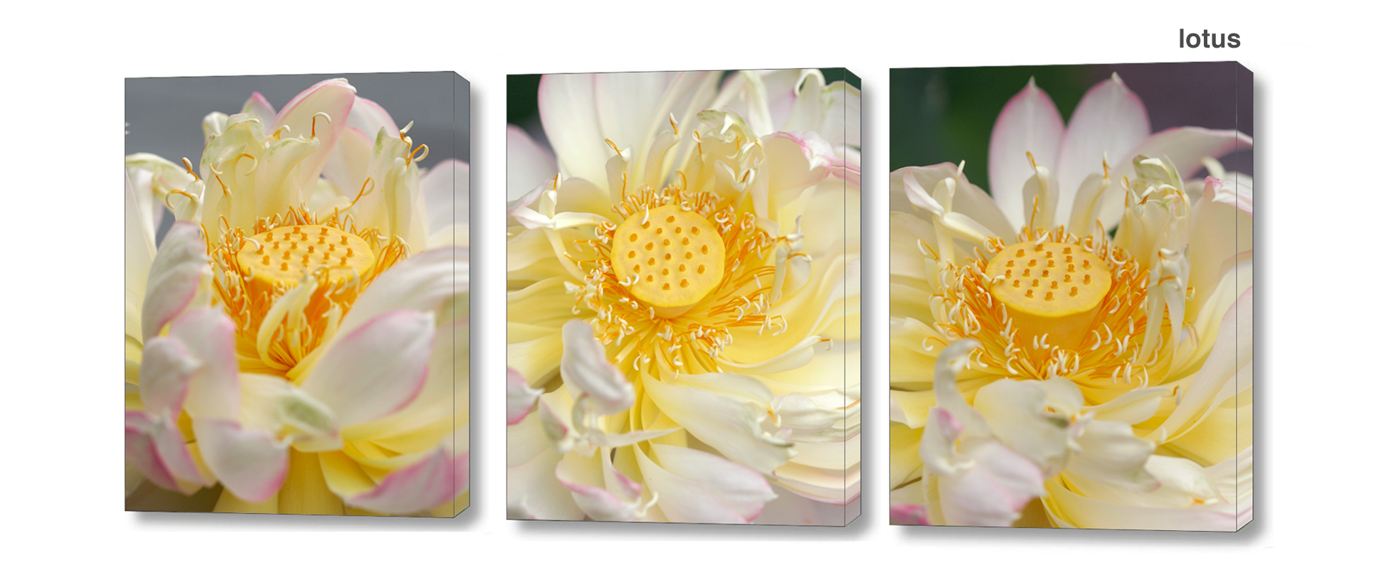 lotus series - Floral Series Wall Decor Macro Photography Matted & Giclée Canvas Prints