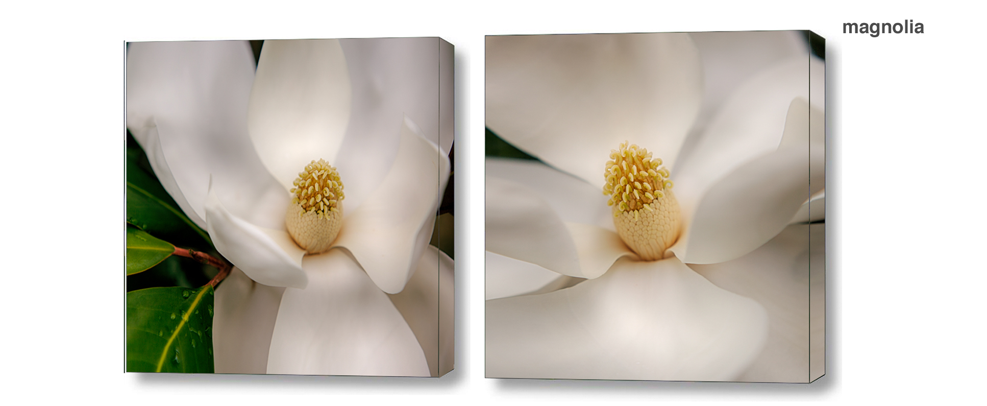 magnolia series - Floral Series Wall Decor Macro Photography Matted & Giclée Canvas Prints