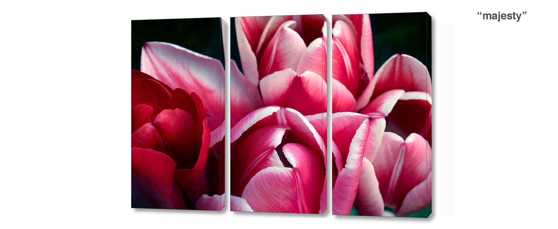 triptych tulip - 3 Piece limited edition giclee canvas floral wall decor