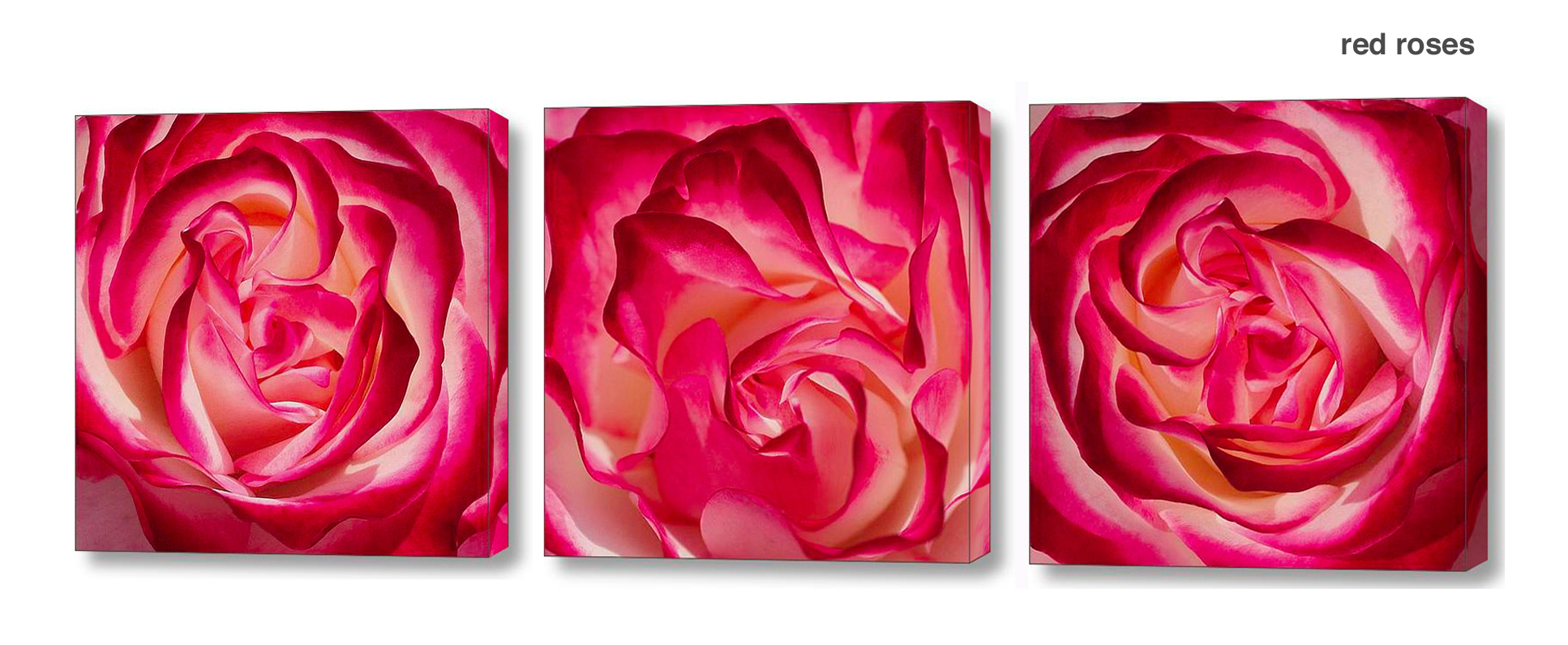 red rose series - floral Wall Decor Macro Photography Matted & Giclée Canvas Prints