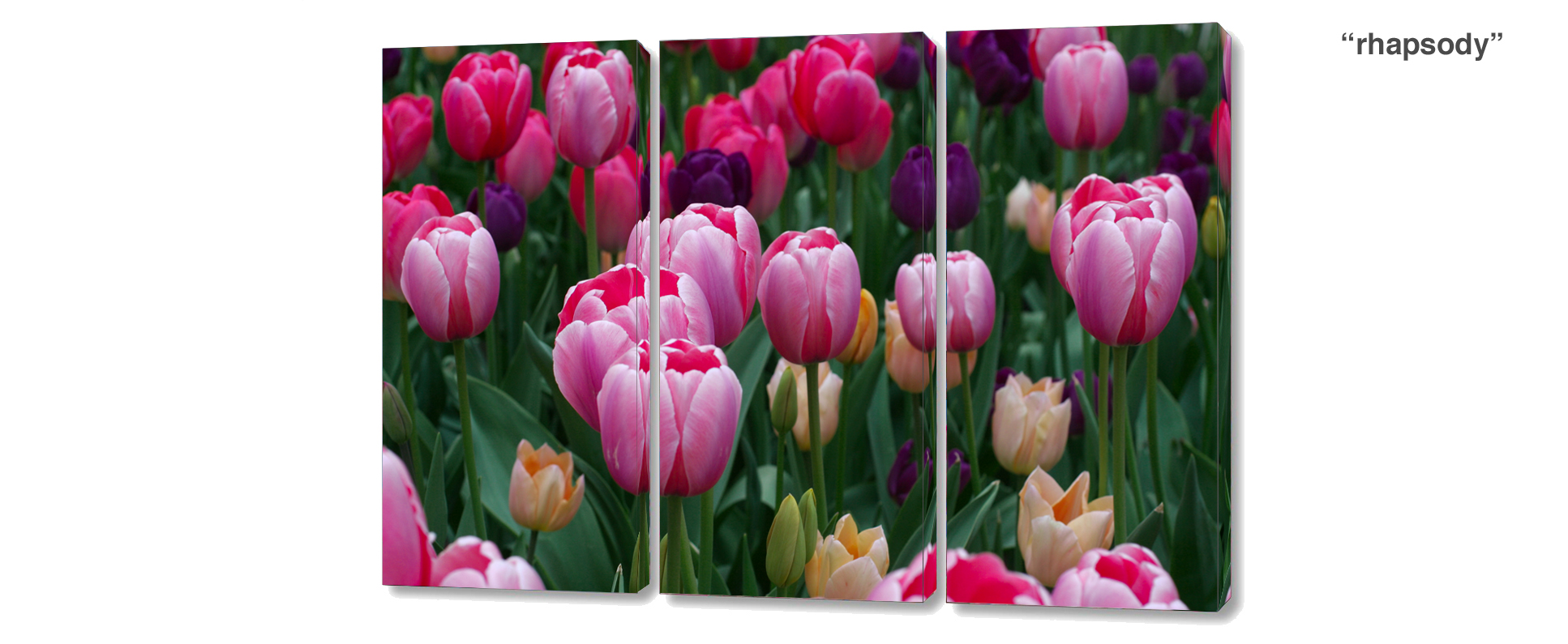 triptych tulips - 3 Piece limited edition giclee canvas floral wall decor
