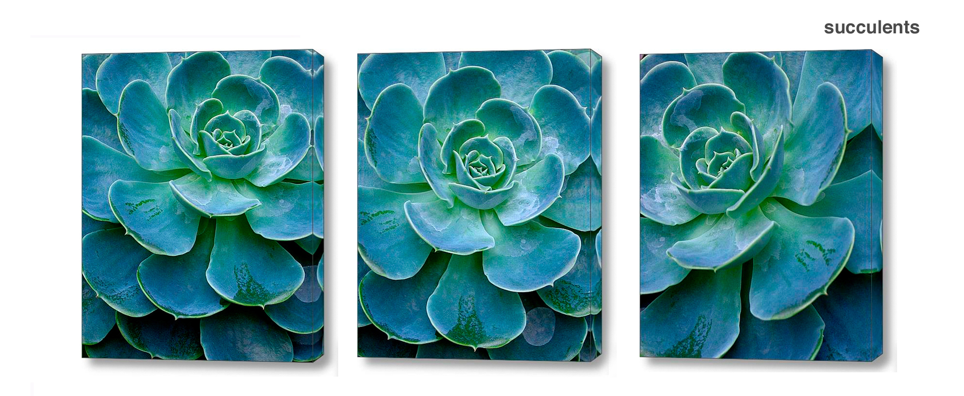 succulent series - Floral Series Wall Decor Macro Photography Matted & Giclée Canvas Prints