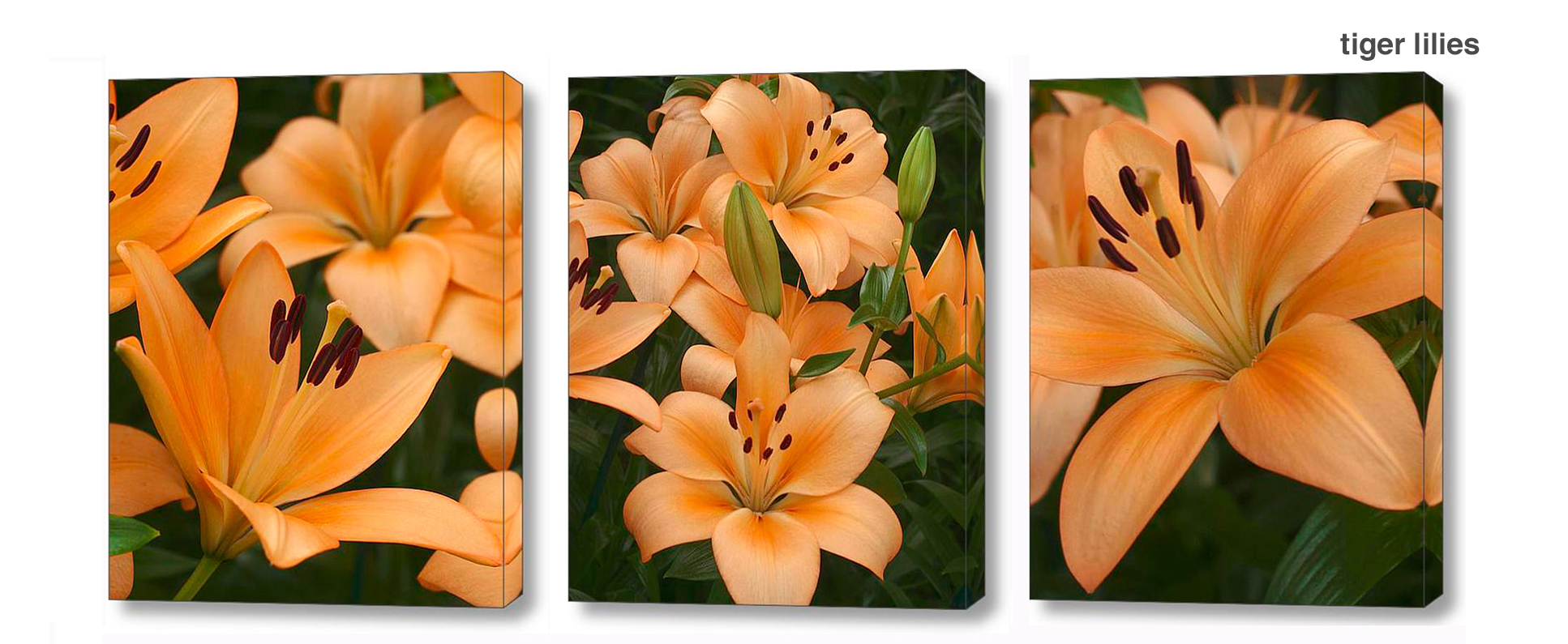 tiger lily series - Floral Series Wall Decor Macro Photography Matted & Giclée Canvas Prints