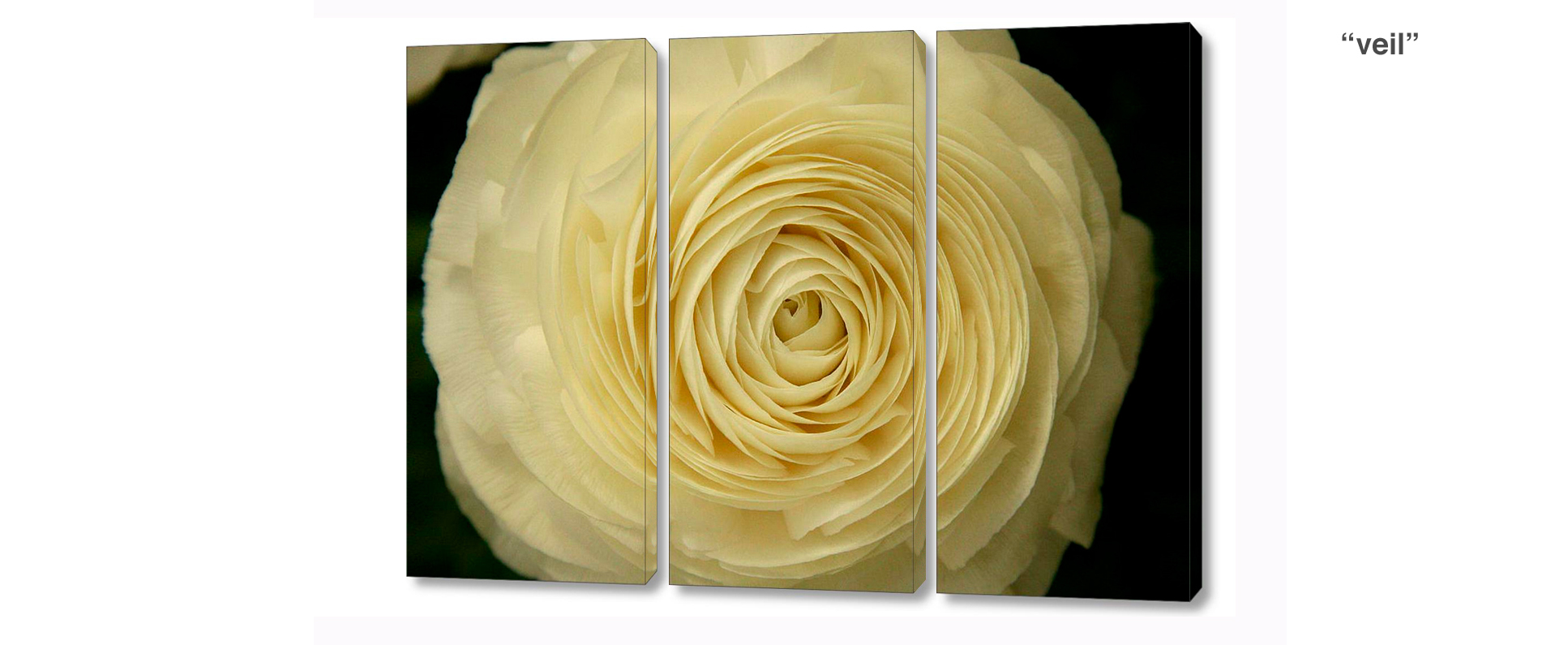 triptych ranunculus - 3 Piece limited edition giclee canvas floral wall decor