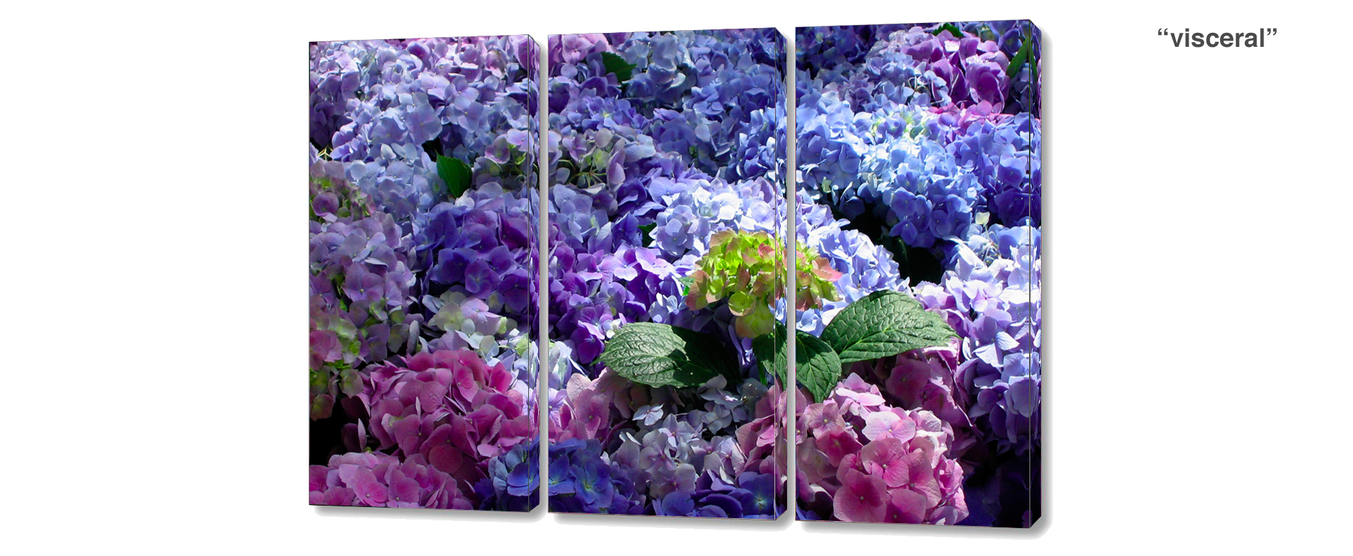 triptych hydrangea - 3 Piece limited edition giclee canvas floral wall decor
