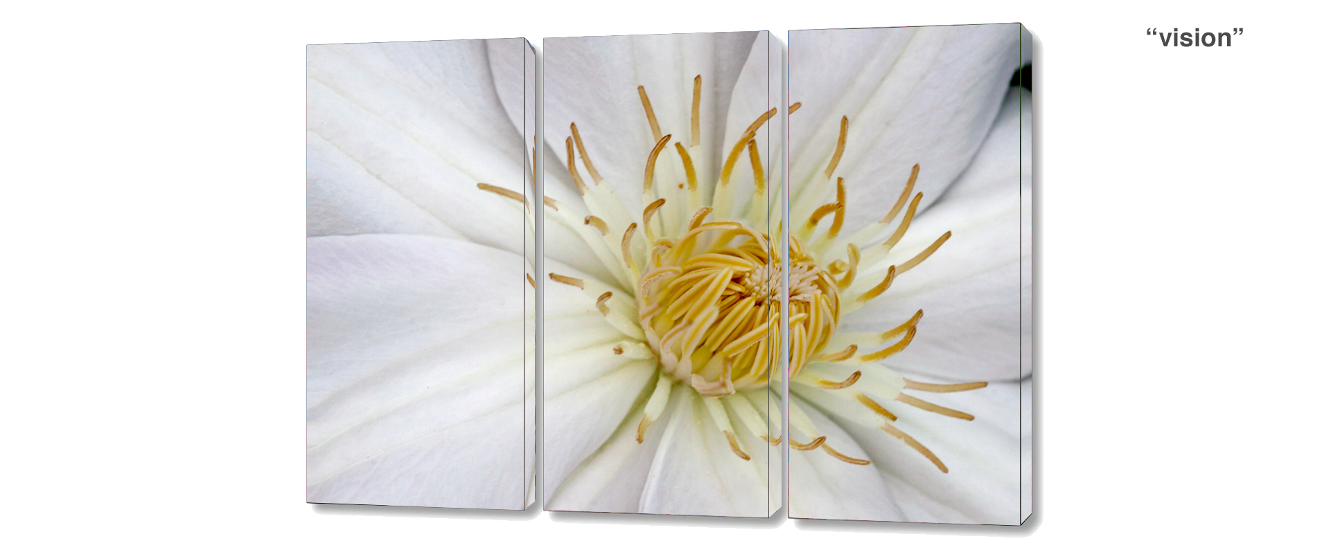 triptych clematis - 3 Piece limited edition giclee canvas floral wall decor