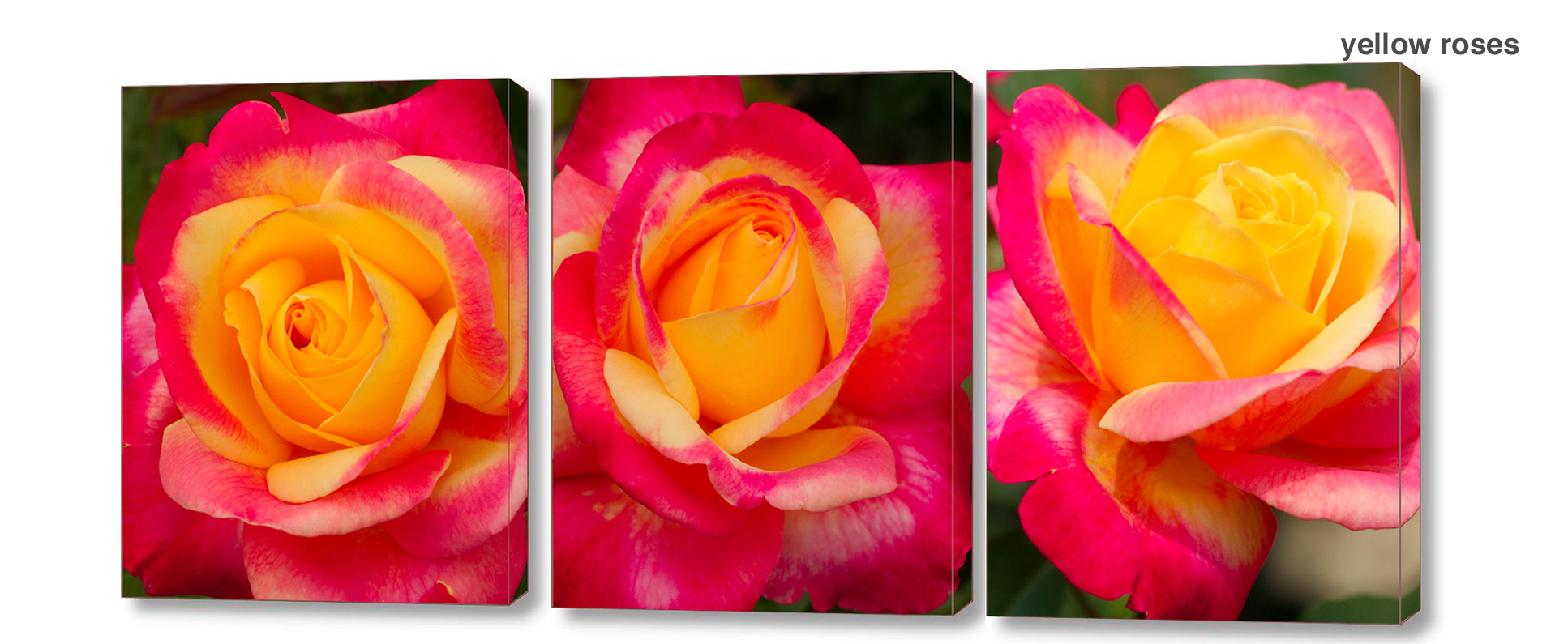 yellow rose series - Floral Series Wall Decor Macro Photography Matted & Giclée Canvas Prints