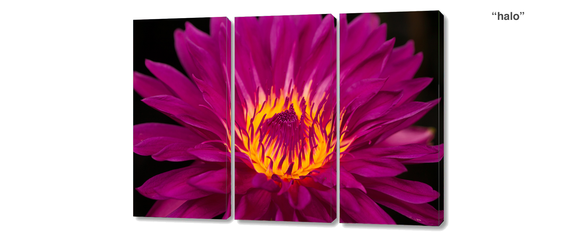 triptych water lily - 3 Piece limited edition giclee canvas floral wall decor