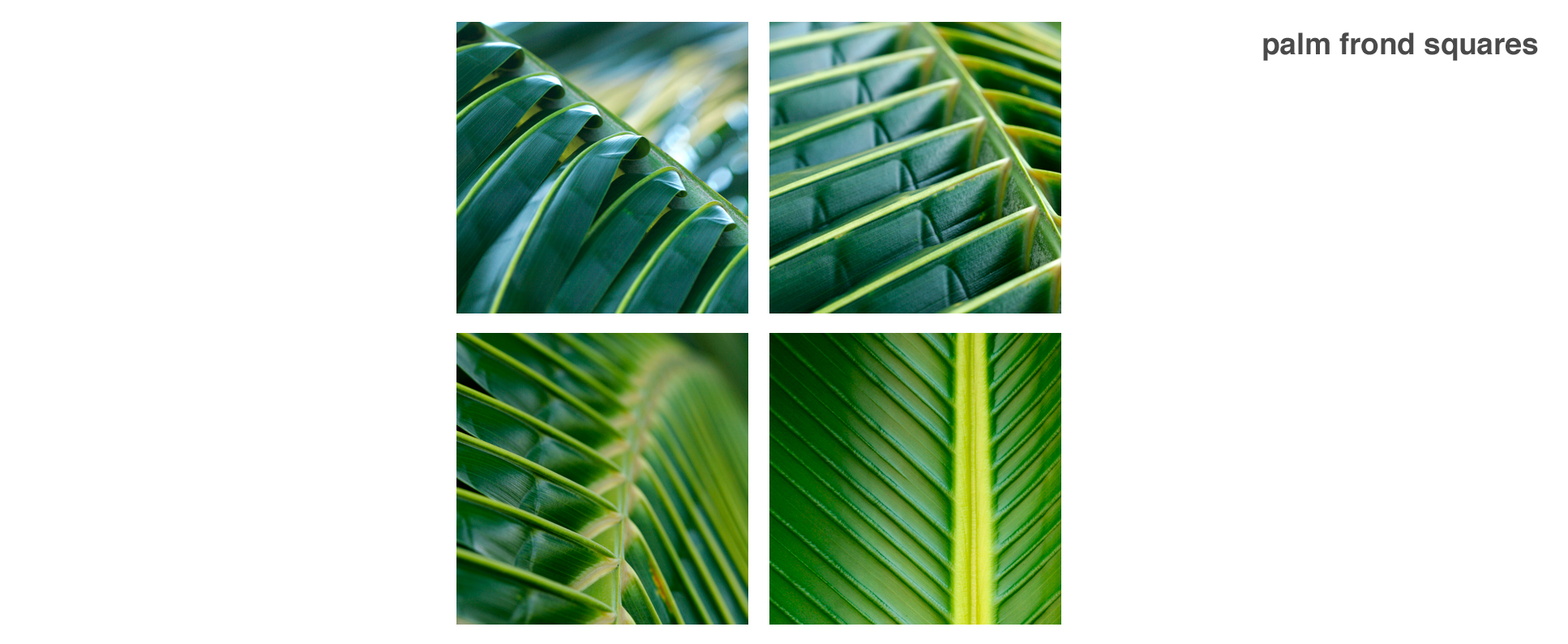 palm fronds Series Wall Decor Macro Photography Matted & Giclée Canvas Prints