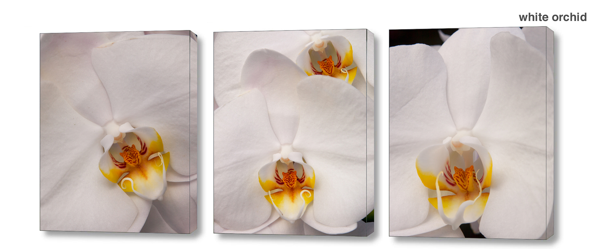 white orchid series - Floral Series Wall Decor Macro Photography Matted & Giclée Canvas Prints