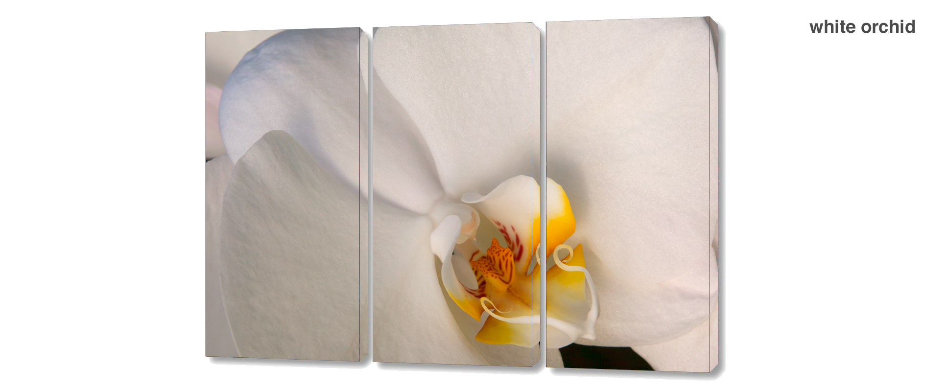 triptych orchid - 3 Piece limited edition giclee canvas floral wall decor