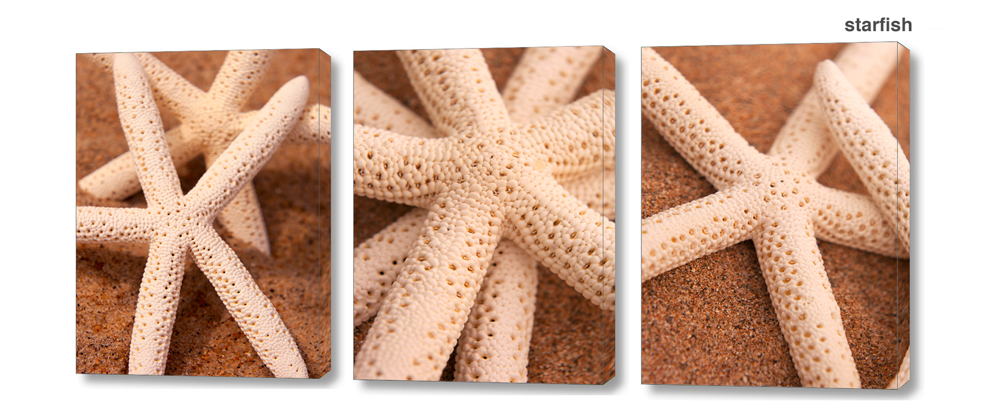 starfish series - Floral Series Wall Decor Macro Photography Matted & Giclée Canvas Prints