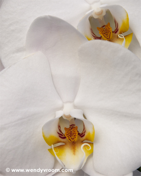Orchids Macro Matted & Giclée Canvas Prints
